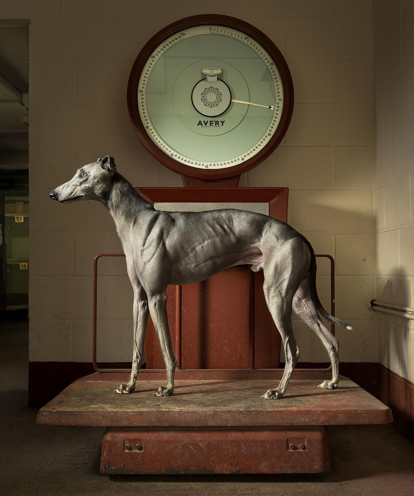 Greyhound-Scales-Final-1336x1600