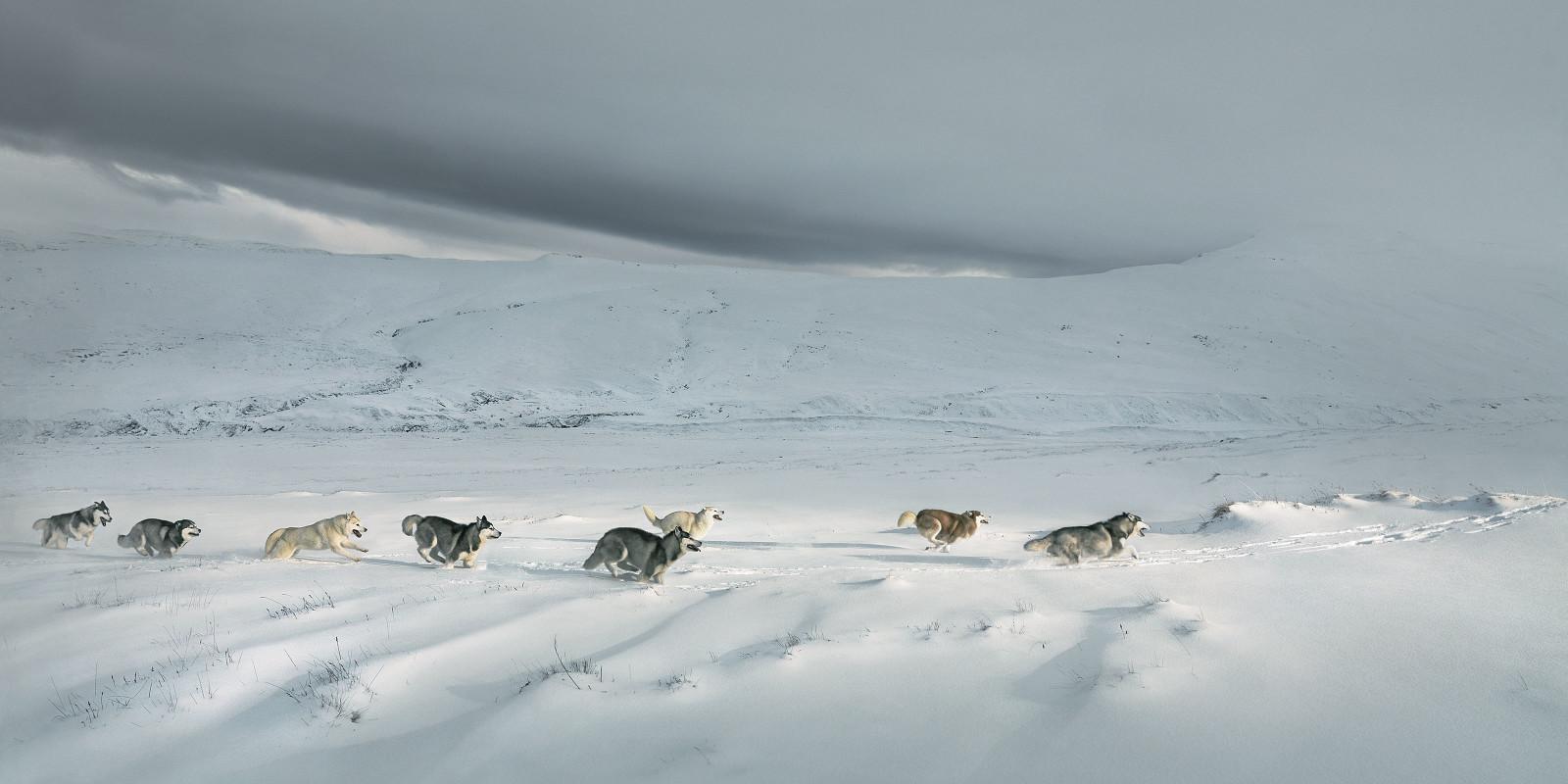Huskies-1600x800