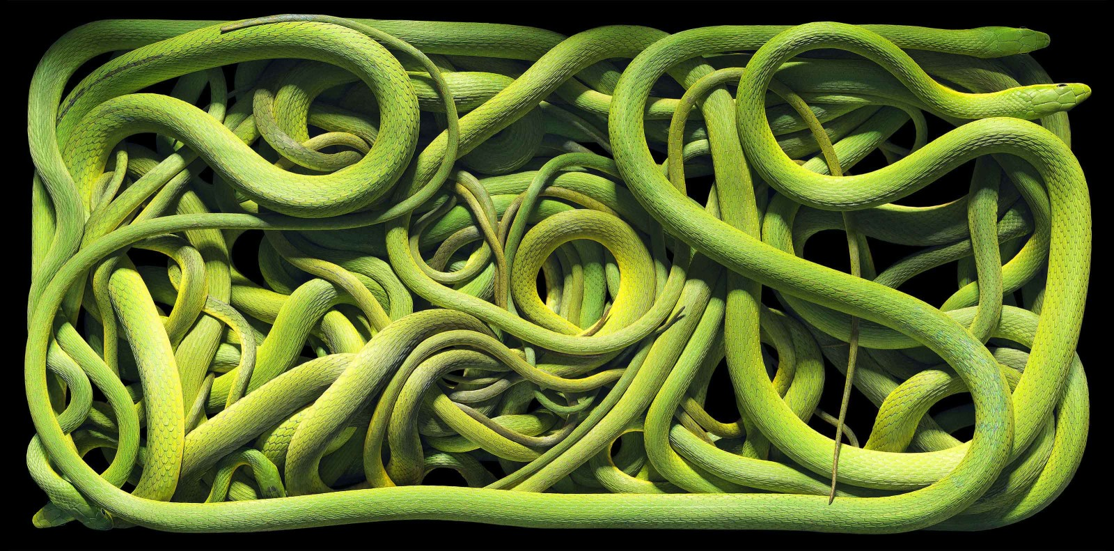 green-snakes1-1600x791